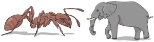 Square-Cube Law Ant Elephant