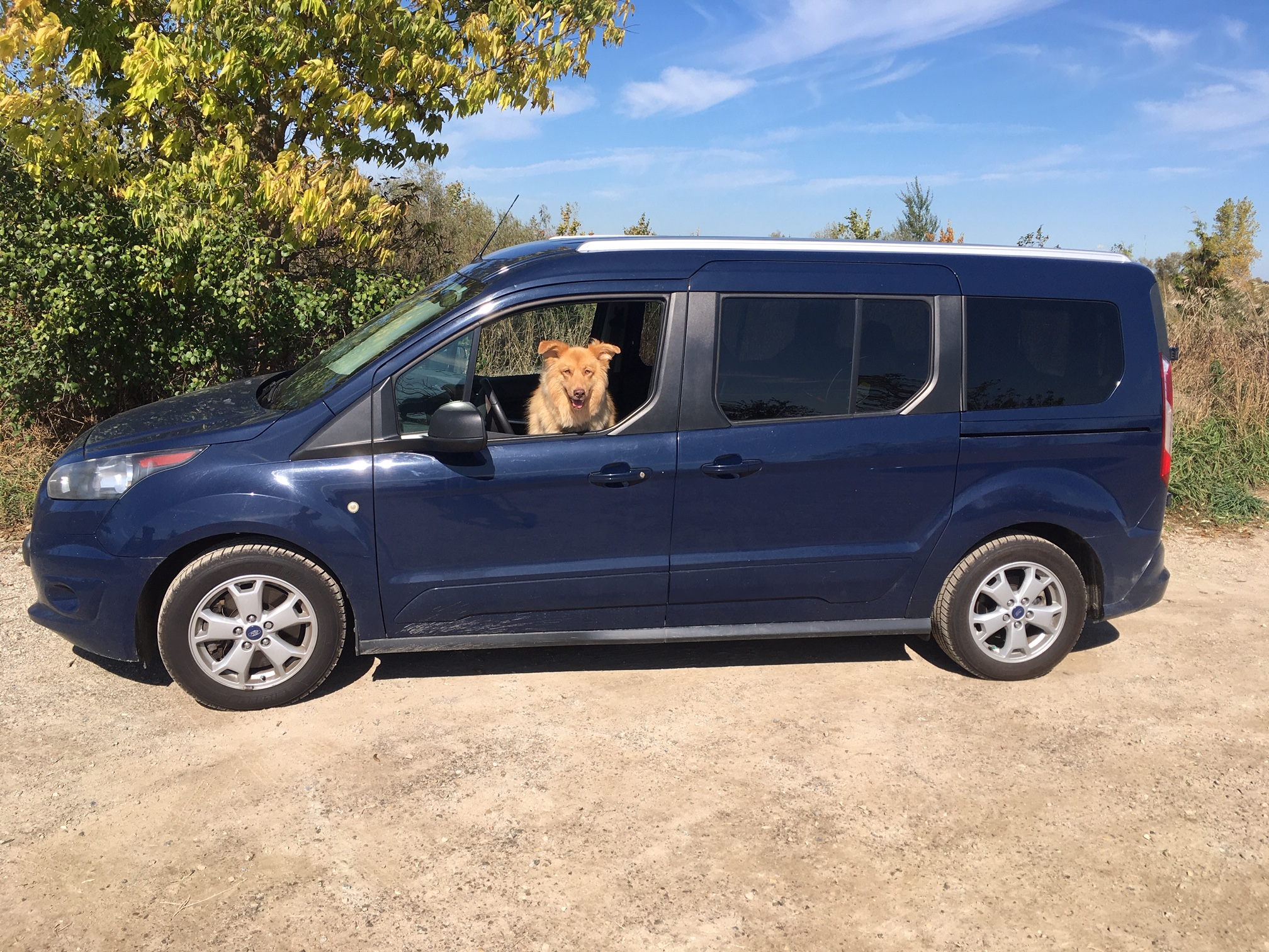 Tall Driver Gets Ford Transit Connect Passenger Wagon